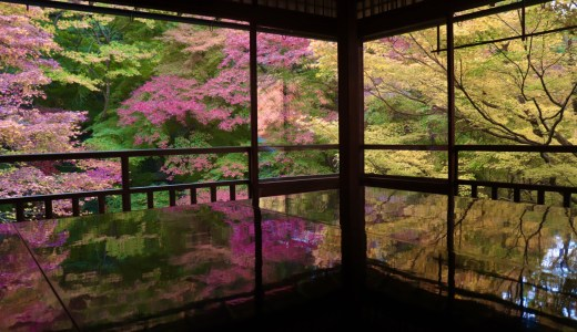 【八瀬】京都へ行ったら一度訪れたい憧れのお寺!紅葉シーズンの瑠璃光院へ行ってきた【京都の寺院】