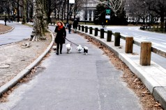 Some Dog-walking in Central Park