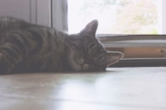 Sleepy Kiko
