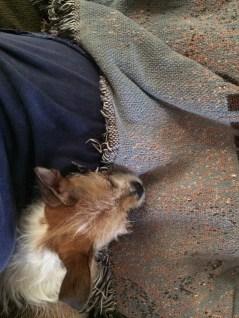 Sleeping on my lap.