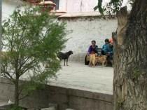 China_2016_feedingdogs