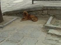 China_2016_reddog