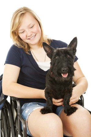 A blond teenage girl in a wheelchair holding her small black dog. White background.