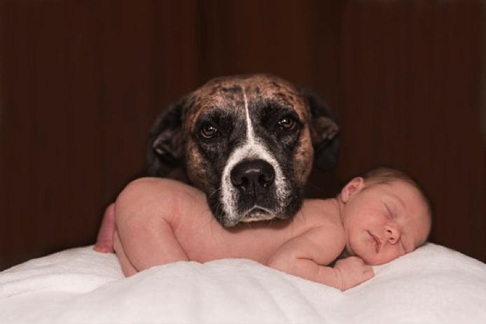 赤ちゃんと犬はいつから一緒に住める?飼うときのメリットや注意点は?