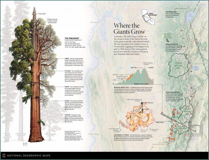 Giant Sequoia Range Map