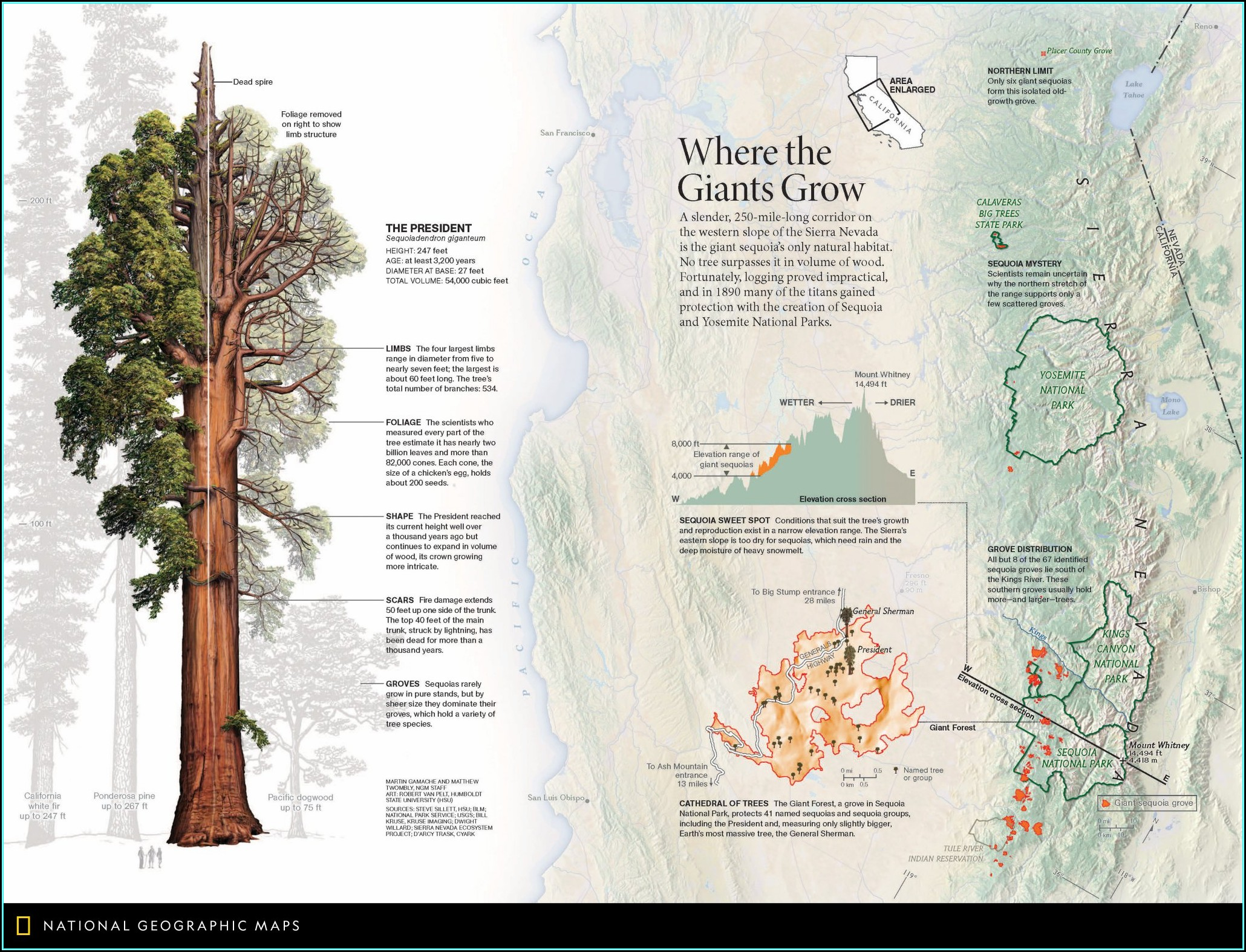 Giant Sequoia Range Map