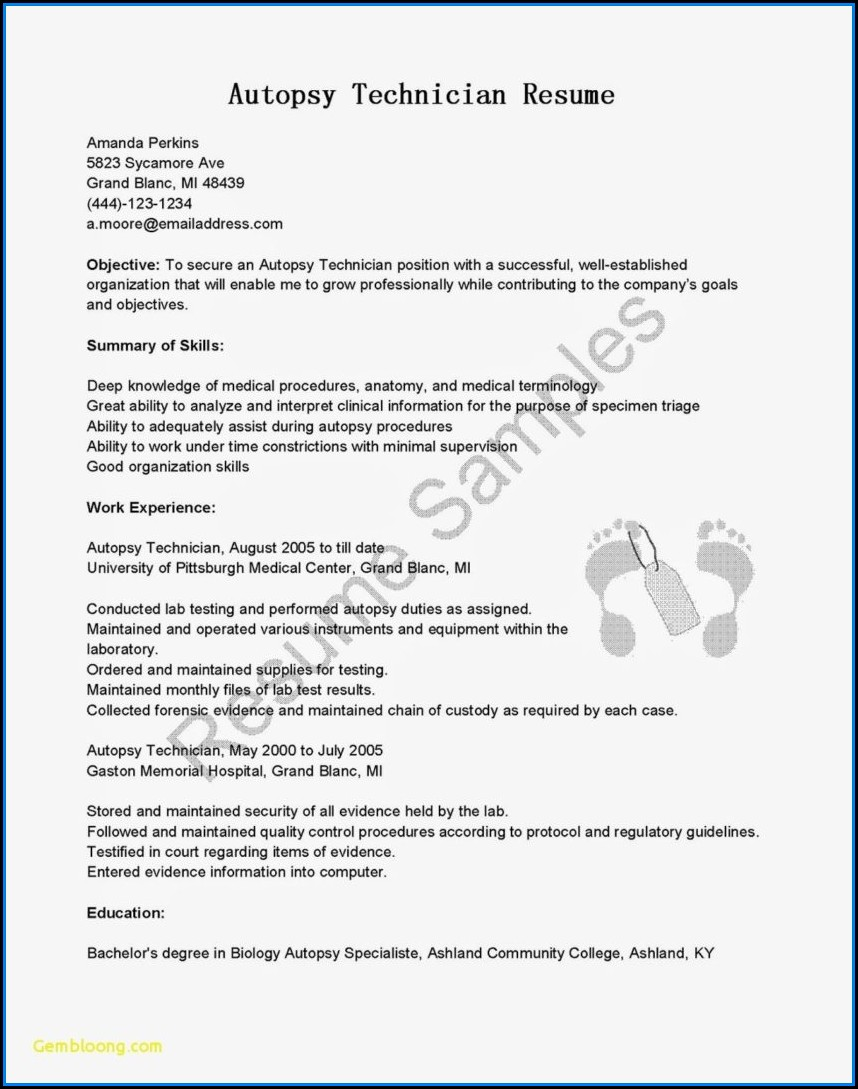 Internship Resume Template Free Download
