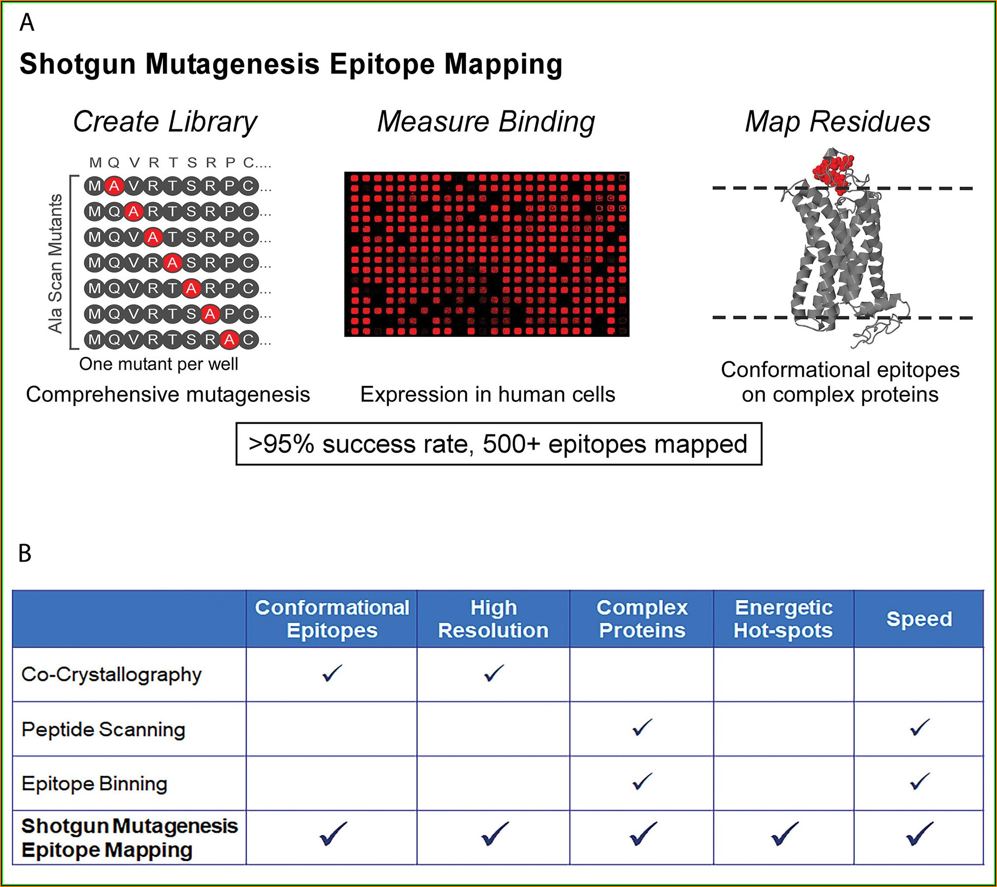 Monoclonal Antibody Epitope Mapping
