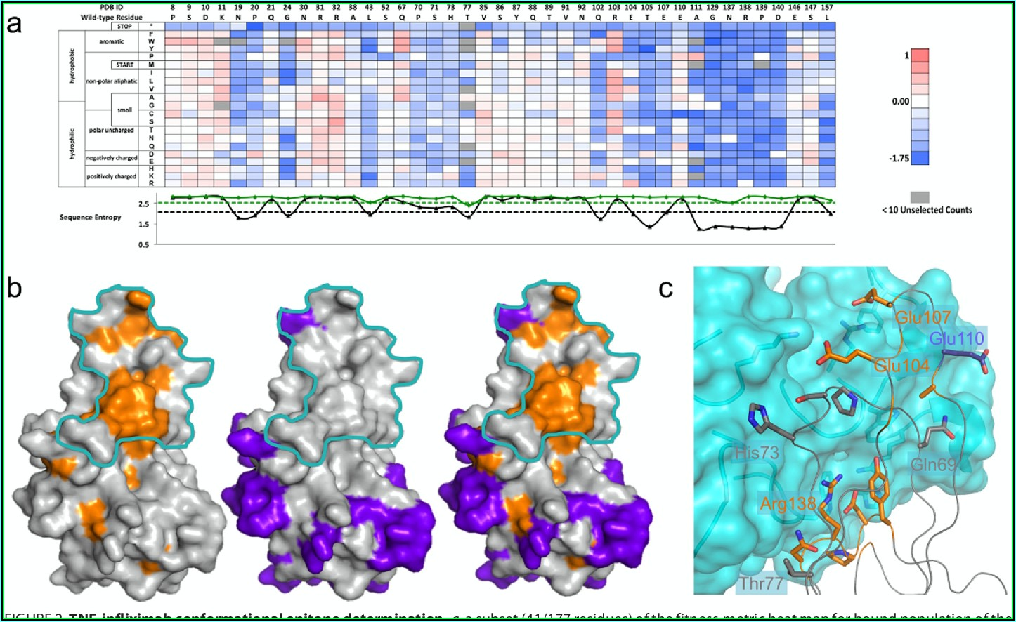 Rapid Fine Conformational Epitope Mapping Using Comprehensive Mutagenesis And Deep Sequencing
