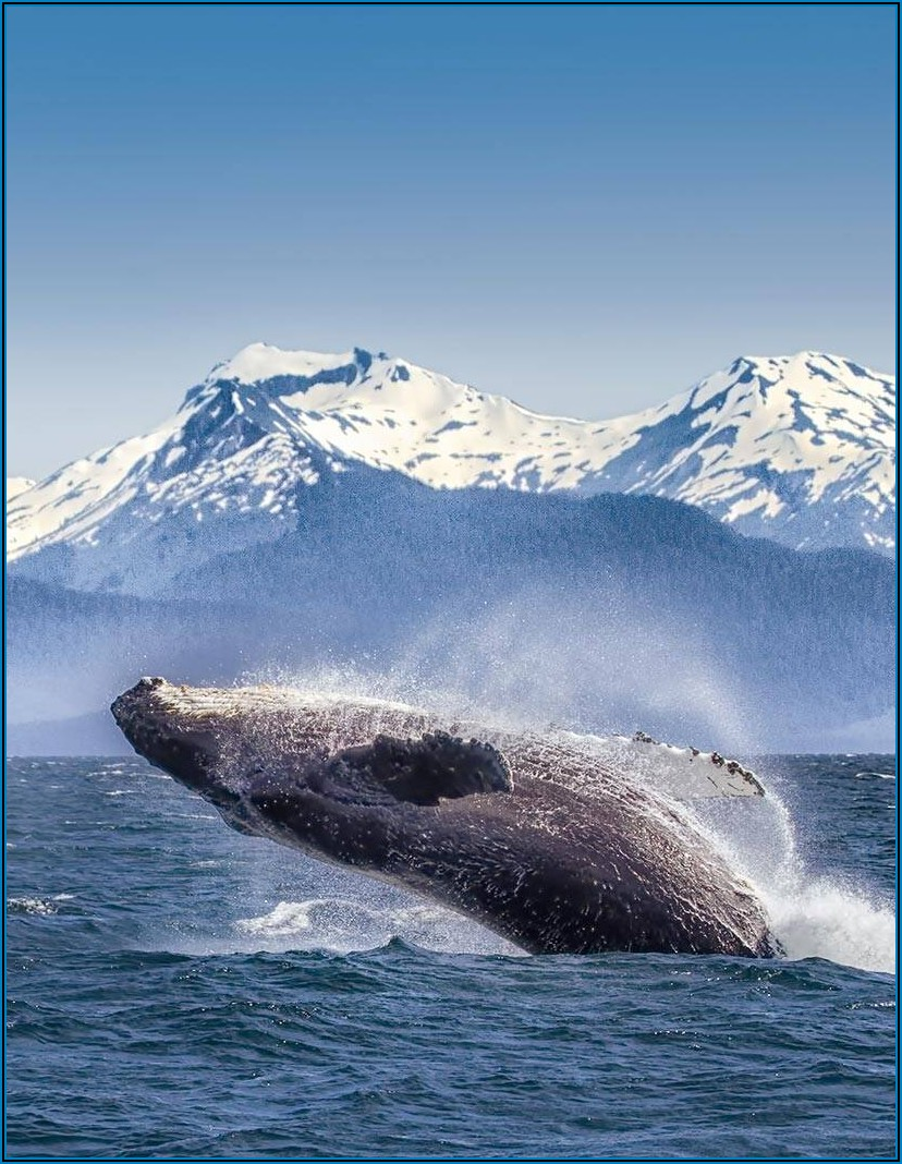 Celebrity Cruises Alaska Shore Excursions Brochure