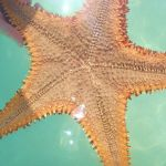 Piscina Natural tour red sea stars Dominican Republic