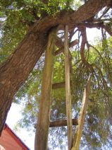Cell phone tree (the only spot on the island with cell service)