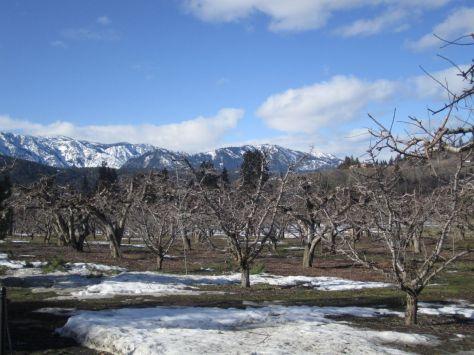 Winter wine tasting in Leavenworth--Wedge Mountain Winery