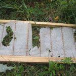 Honeybee farming Latta Plantation