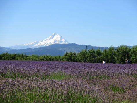 Mount Hood, Lavender Valley, Hood River, Oregon