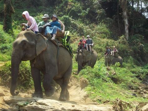elephants in Thailand 134