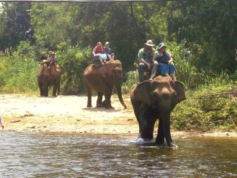 elephants in Thailand 165