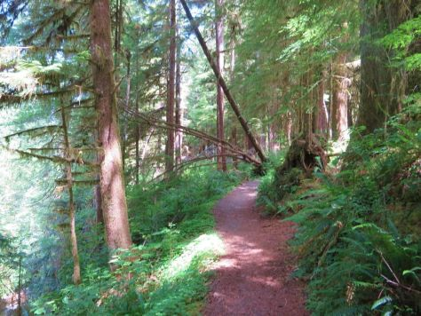 Lake Quinault loop trail