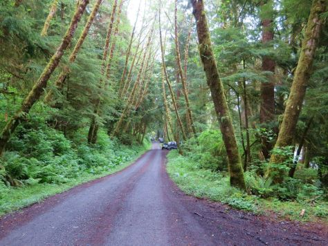 Oil City Road along the Hoh River