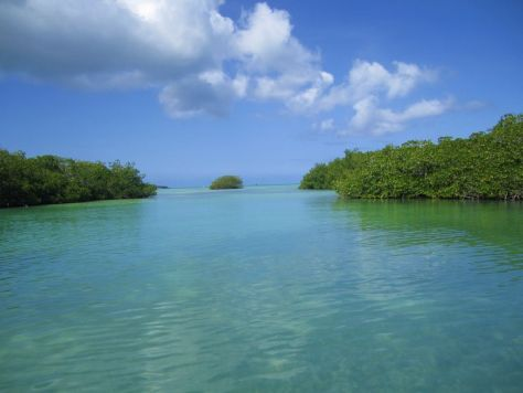 Mangroves, Dominican Republic