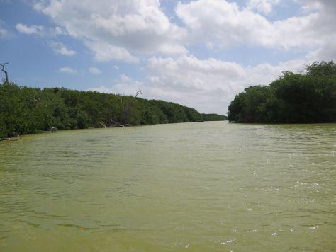 rio lagartos mexico