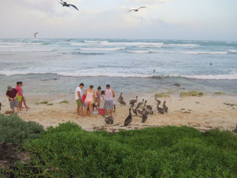 Tulum fisherman being harassed by pelicans