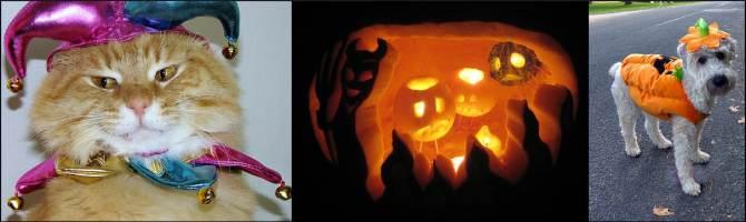 pet-halloween-costumes