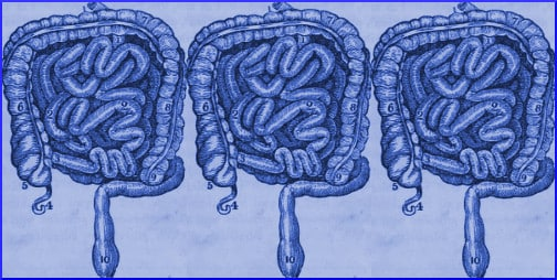 intestines-blue-illustration