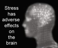 brain and stress - Childhood Trauma, Stress and the Vulnerable Developing Brain
