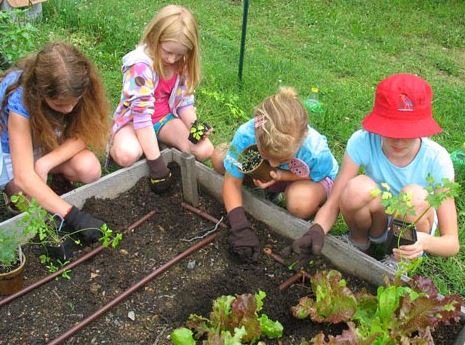 Family Food Storage: Why Your Family Should Have a Garden