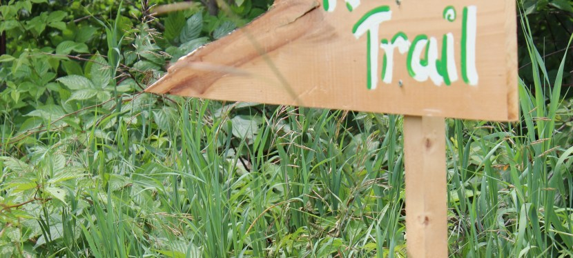 Child Life in the Community: Fiddlehead Care Farm