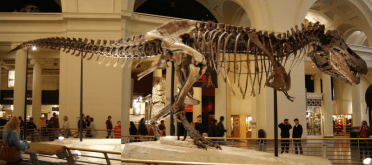 Complete image of Sue from the side
