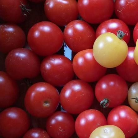 Tomate Rojo Miel de Mexico