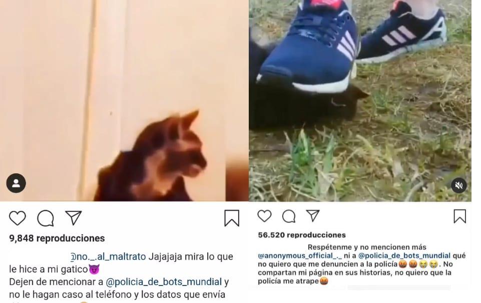 APLASTA y QUEMA gatitos, investigan brutal MALTRATO ANIMAL en Punta Arenas