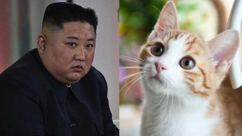 Kim Jong-un ordena MATAR a gatos y palomas para «evitar» propagación del Covid en su país