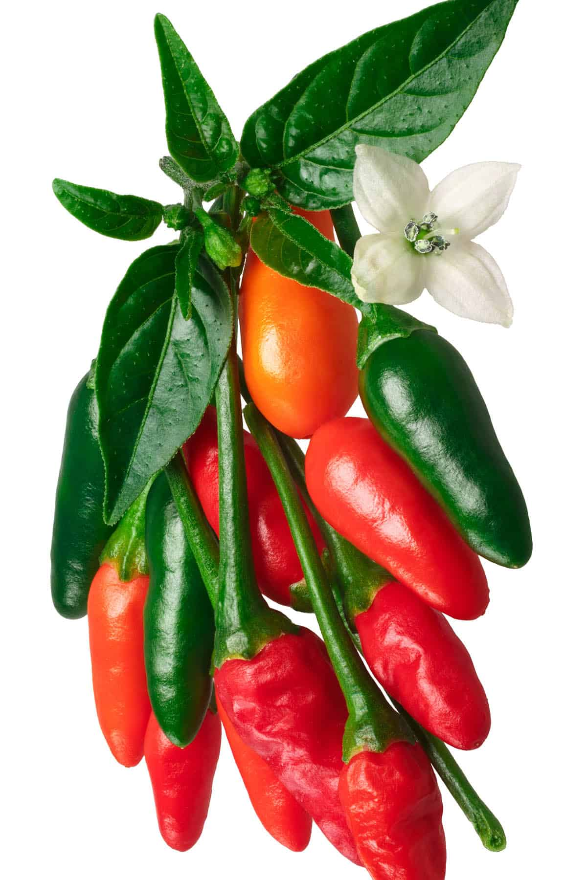 Pequin Peppers – All About Them