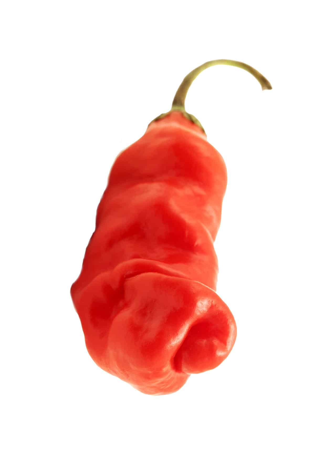 Peter Pepper: The Oddly Shaped Chili Pepper