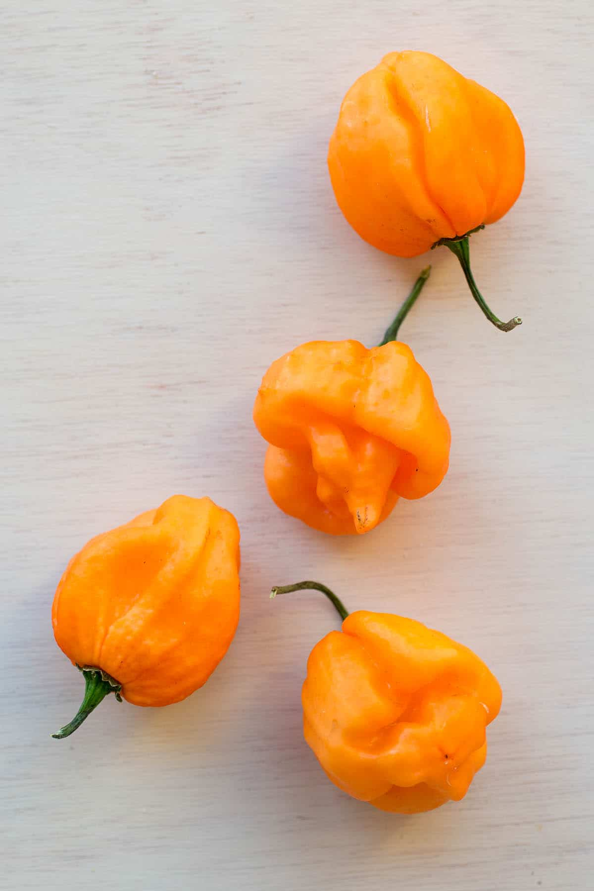 Scotch Bonnet Chili Peppers – All About Them