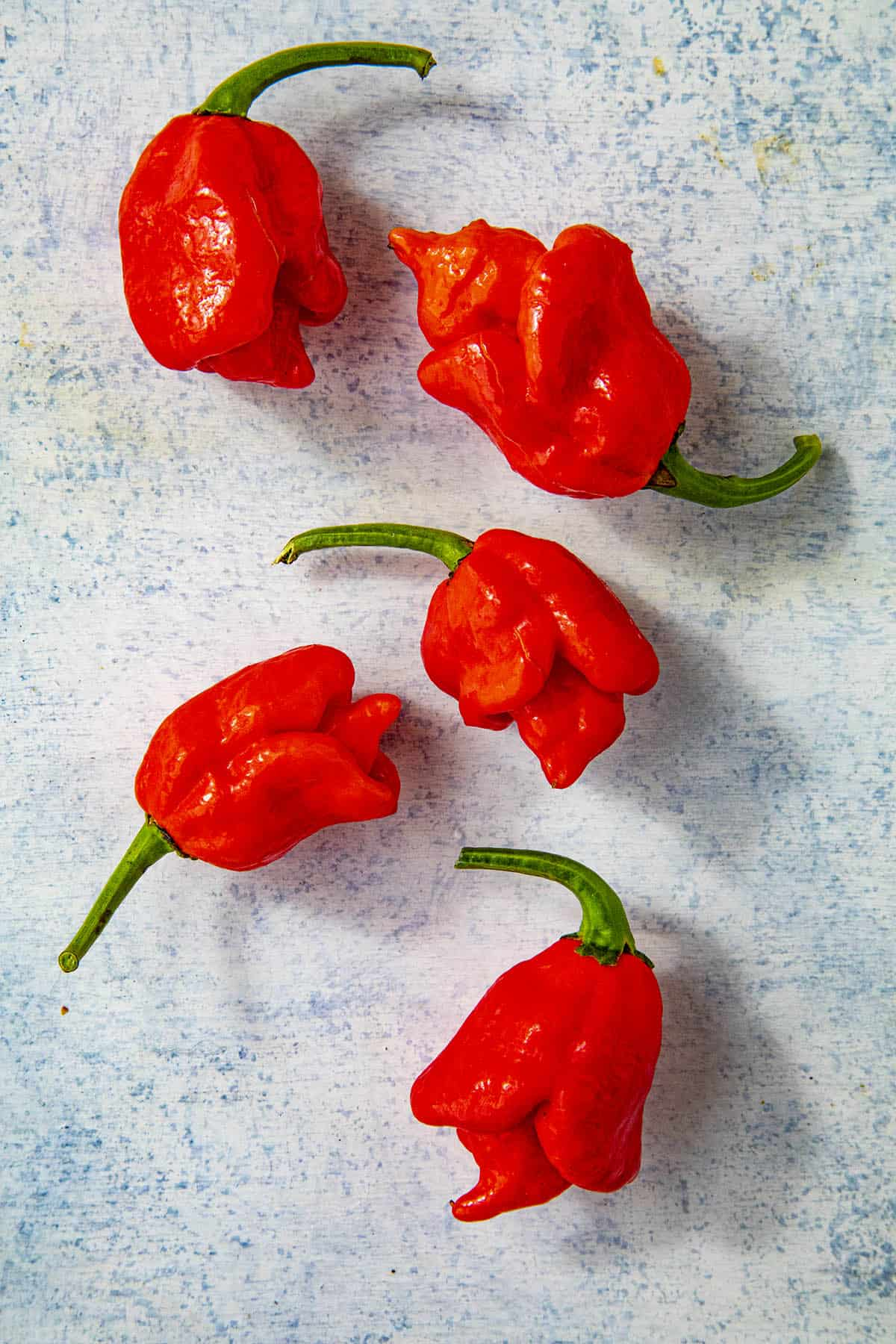 Trinidad Scorpion Pepper