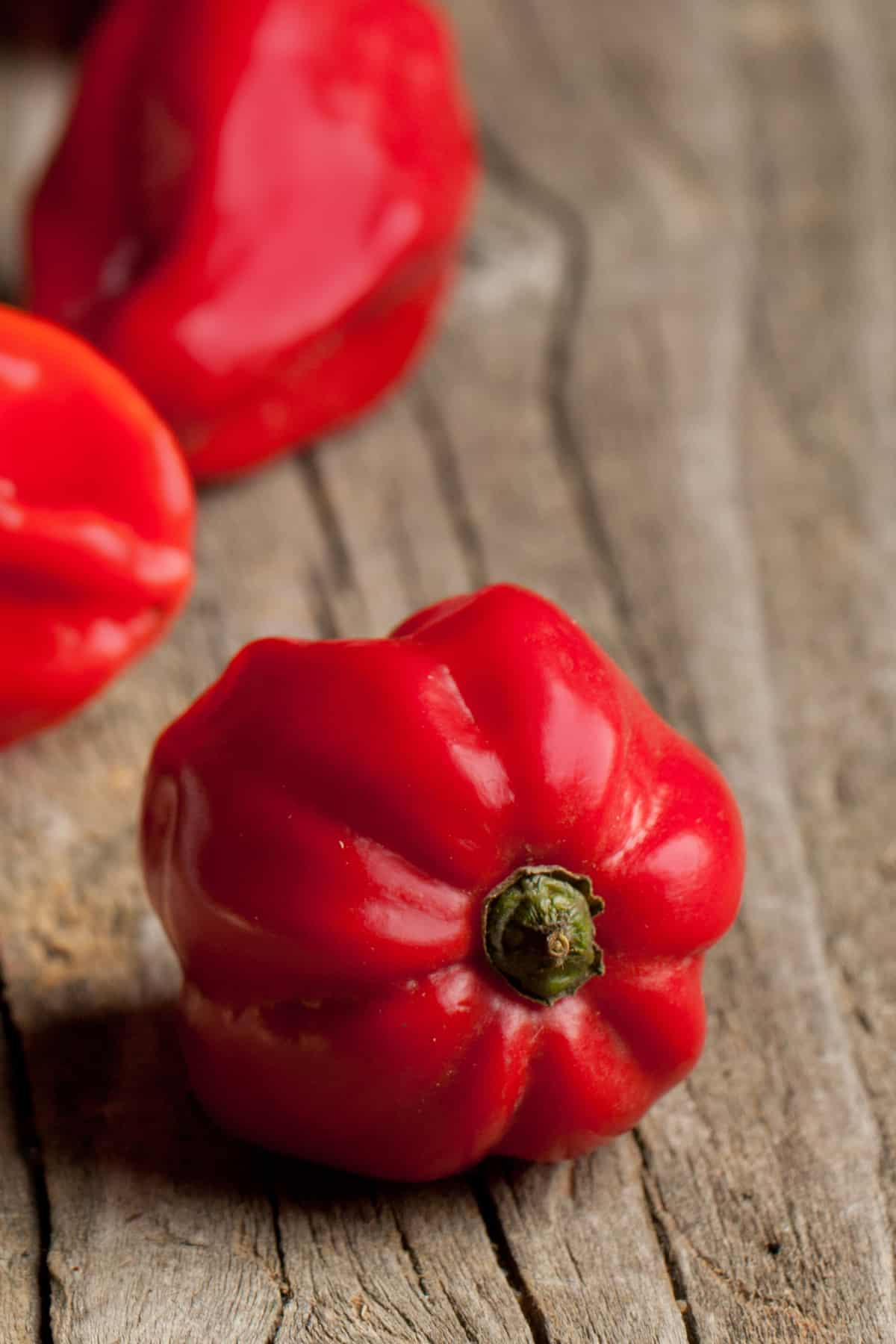 Red Savina Pepper