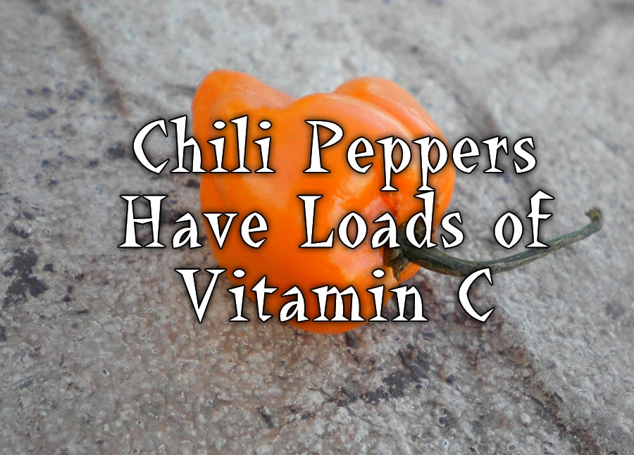 Chili Peppers Have Loads of Vitamin C