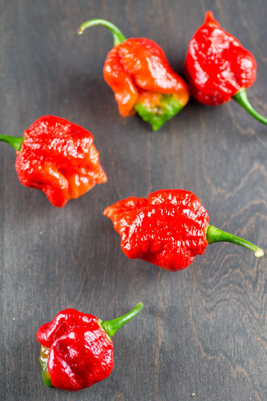 7 Pot Barrackapore Chili Pepper