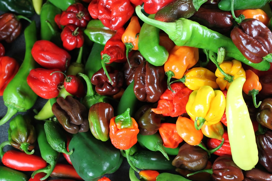 What Makes Chili Peppers Hot?