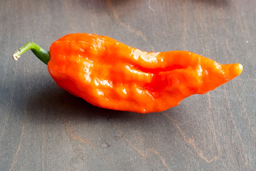 Bhut Jolokia (or Ghost Pepper)