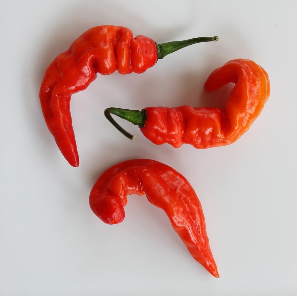 Tshololo Chili Pepper