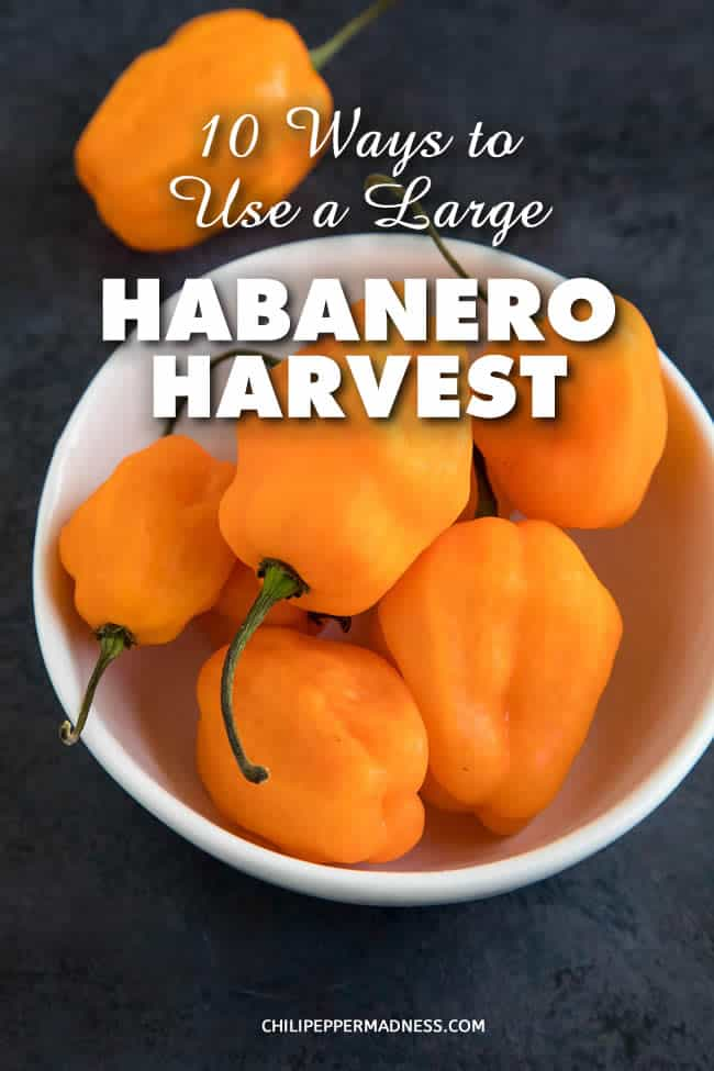 10 Ways to Use a Large Habanero Pepper Harvest