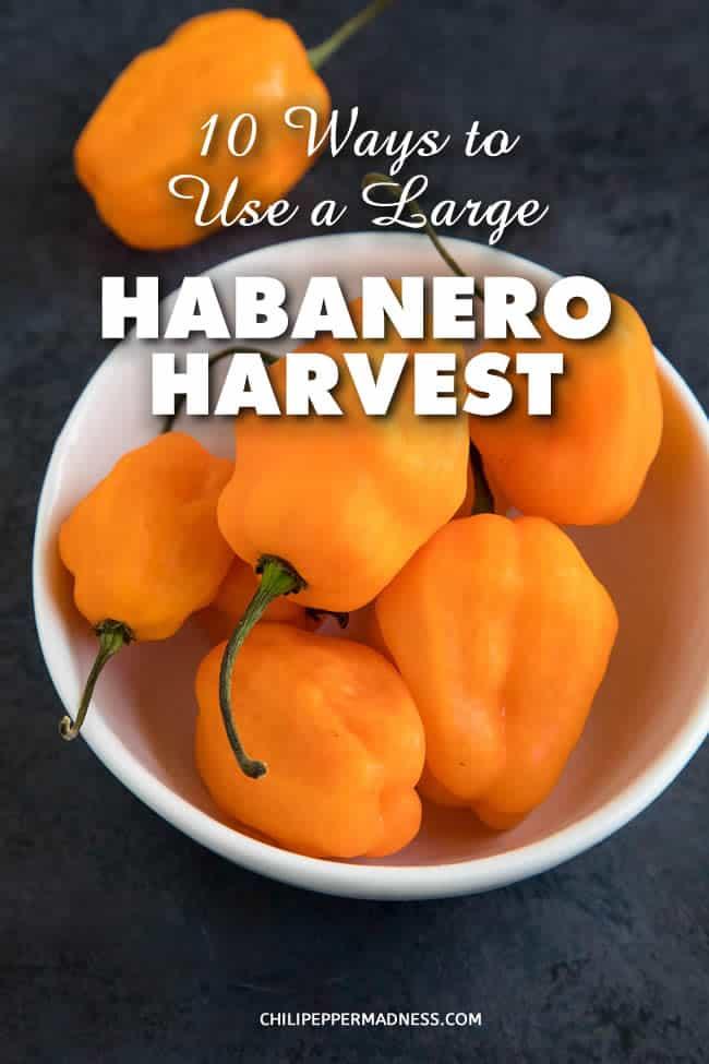 10 Ways to Use a Large Habanero Pepper Harvest