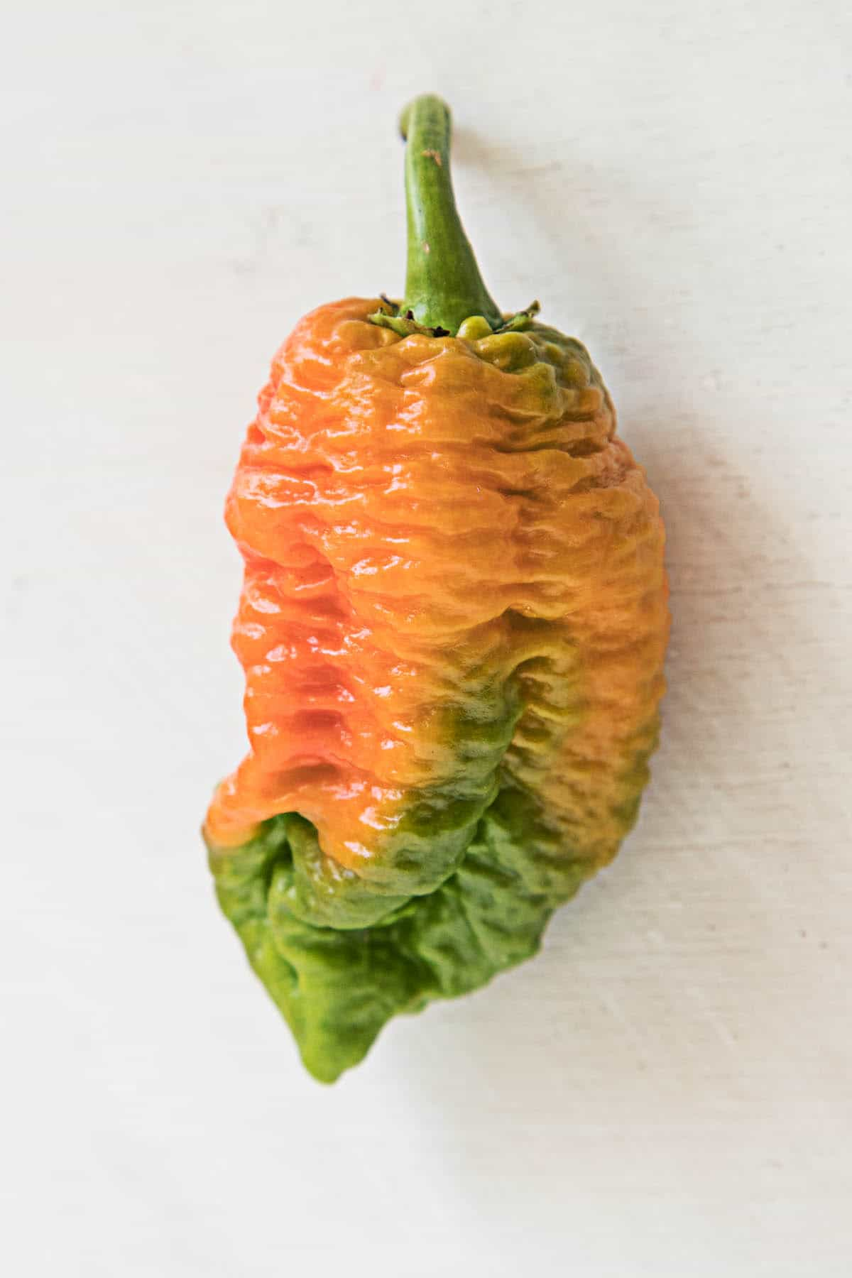 Brain Strain Chili Pepper - One of the Hottest Chili Peppers in the World