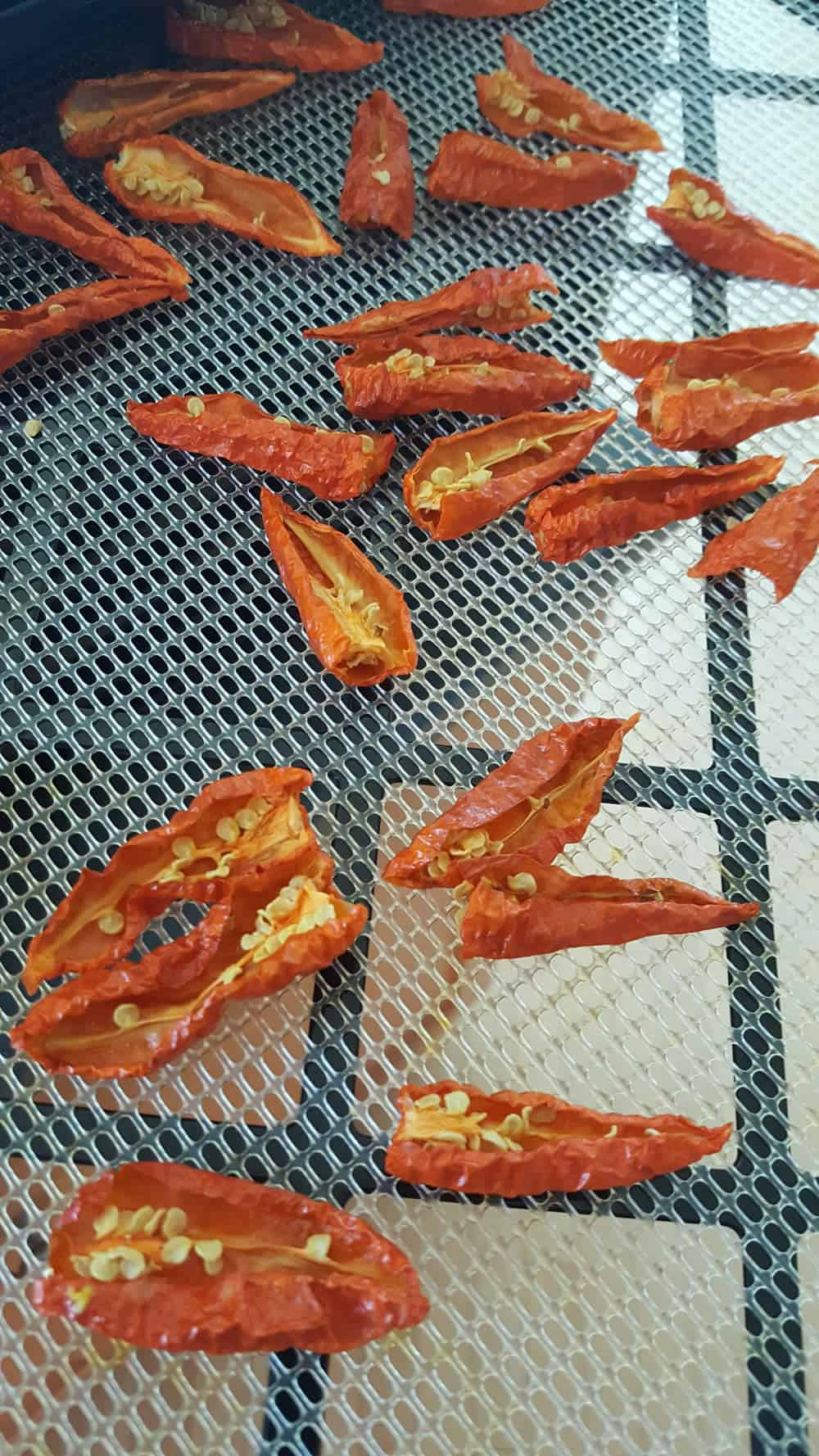 Dried Ghost Peppers, just out of the dehydrator