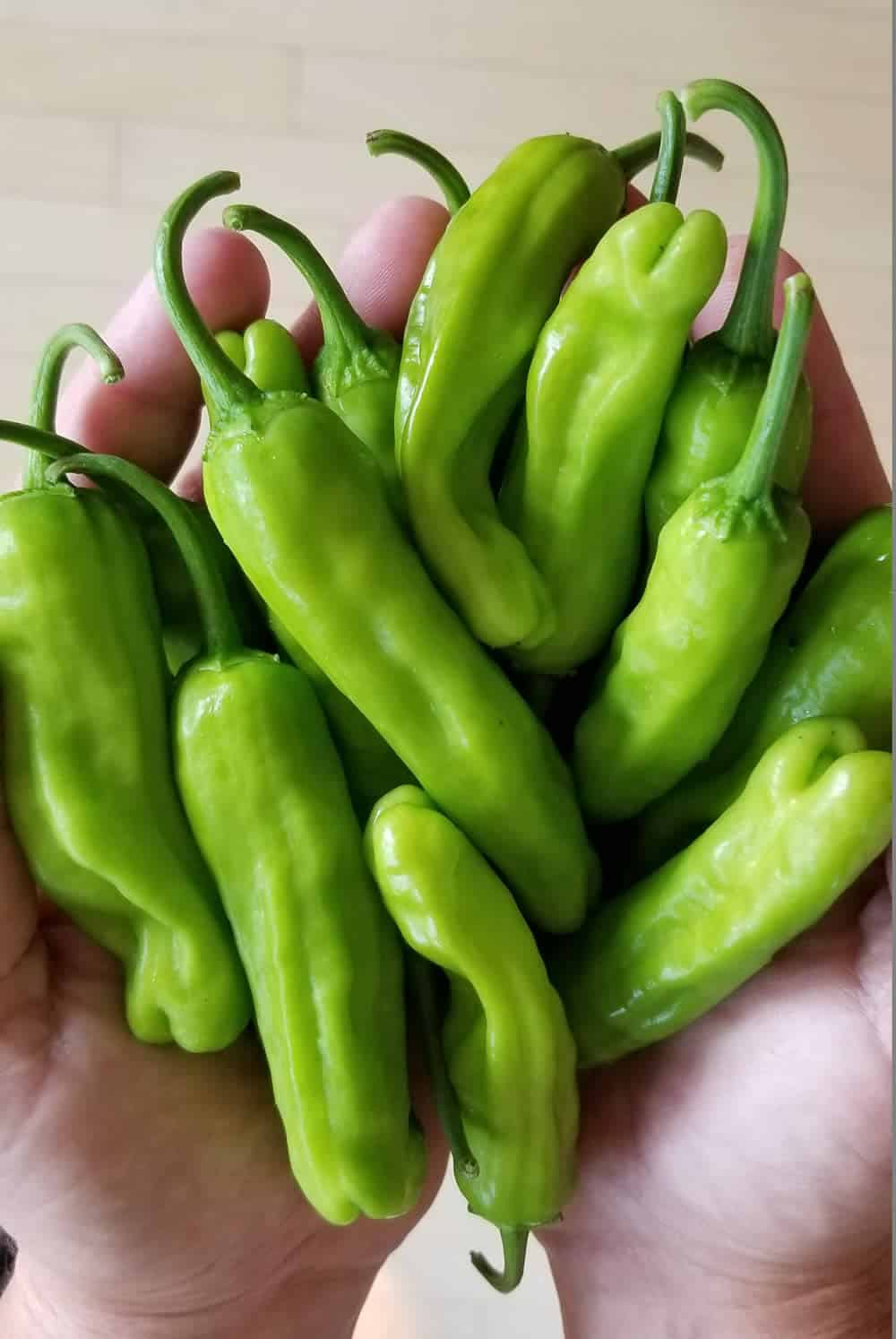 Shishito Peppers - So Many of Them!